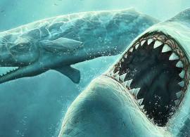 MEG noticia: Más nombres para el tiburón
