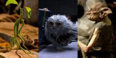ANIMALES FANTÁSTICOS Y DÓNDE ENCONTRARLOS fotos: Animalitos fantásticos
